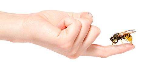 Resultado de imagen para verano e insectos