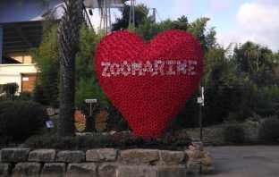 cupido zoomarine