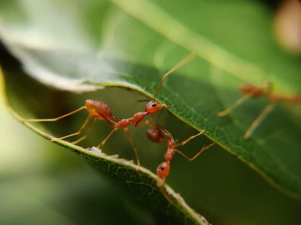 Essential oils to get rid of ants - Vivorific Health
