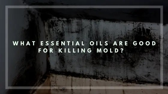 What Essential Oils Are Good For Killing Mold-Vivorific Health