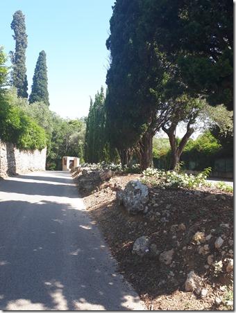 9 - Cyprès Notre Dame de vie -1