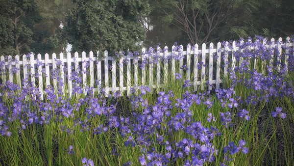 Iridacea - Iris Flower