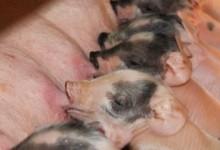 Thema: Dierenwelzijn & Diergezondheid