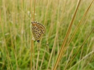 Vlinder er Bij Natuurtuin