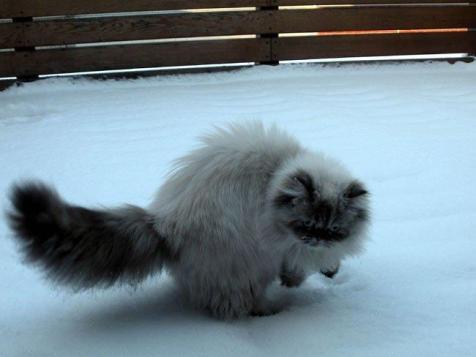 elodie in sneeuw2