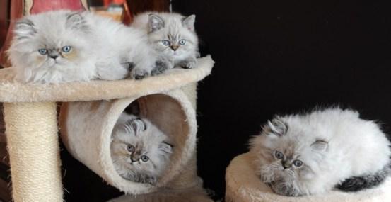 kittens Dushinka x Pedro (10)