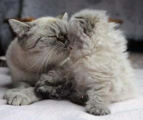 kittens Dushinka x Pedro (6)