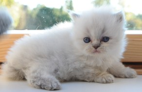kittens Isaura x Pedro (6)