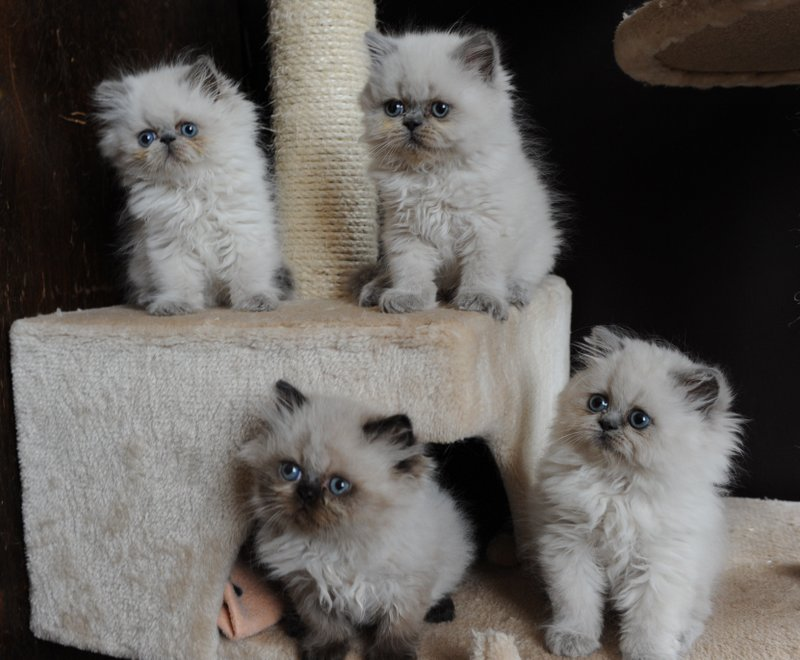 kittens Manja