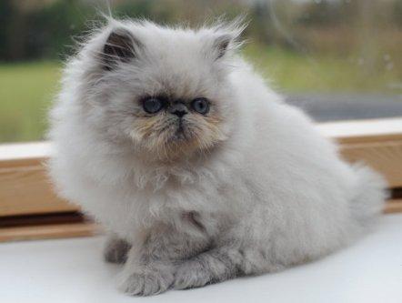 kittens Shanty 3