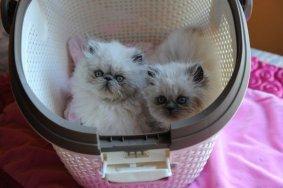kittens Shanty 7