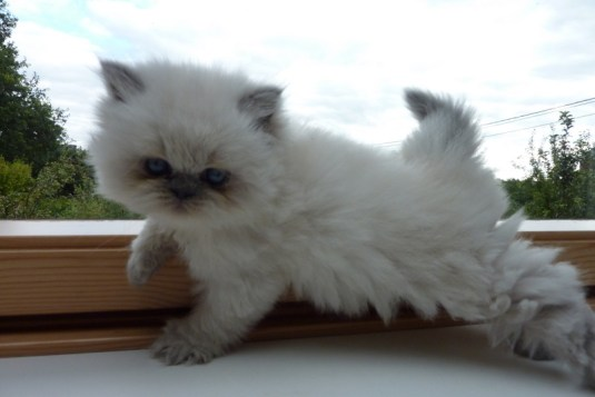 kittens shanty x Pedro (2)