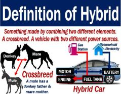 Word of the day-Hybrid