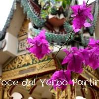 Cinque giorni a Chiang Mai e dintorni: cosa fare, cosa vedere, dove andare