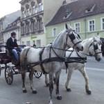 Trasura cu cai pe Muresenilor