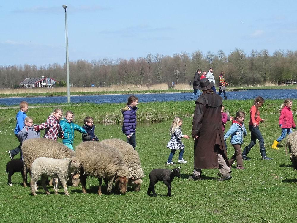 aan-het-werk-met-de-schapen