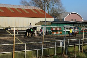 paardenstallingmanege02