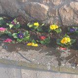 Piantumazione fiori nell'aiuola nei pressi di piazzale Sandro Pertini