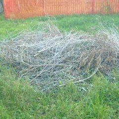 Sfalci da potatura e cestino rifiuti divelto al Parco Ibernesi
