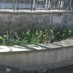 Sistemazione aiuole di Piazzale Sandro Pertini
