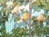 Ausstellung mit Tombola und Tierverkauf der Ziergeflügelzüchter und Vogelliebhaber Greiz e.V.
