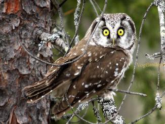 Füttern der Vögel im Winter: Ja oder Nein?