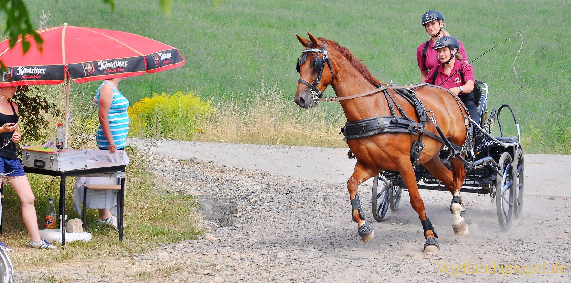 Thüringer Landesmeisterschaften im Gespannfahren 2013 in Mohlsdorf