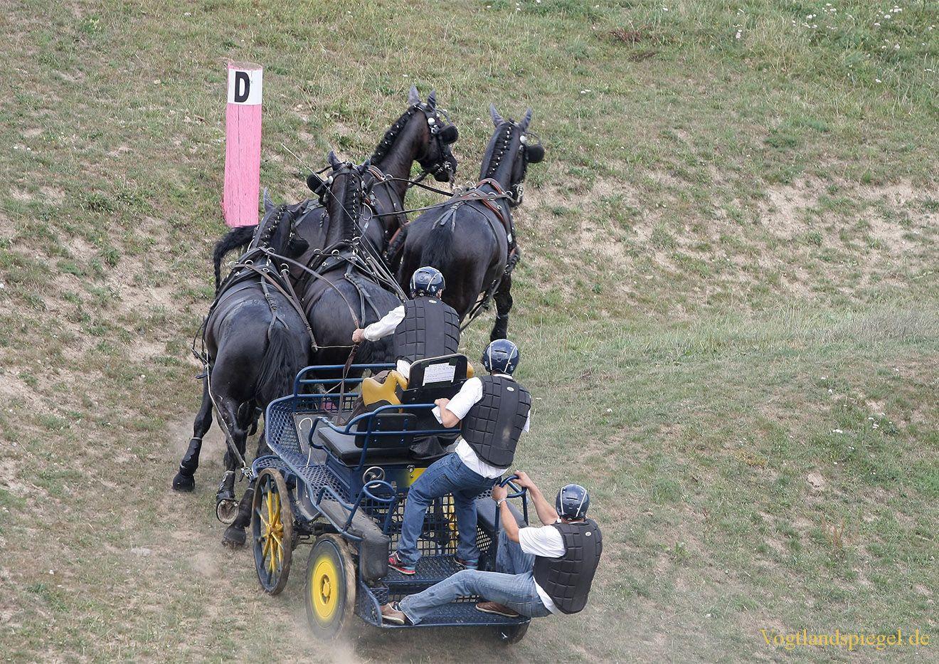 RFV Mohlsdorf e.V. rief Pferdesportfreunde zum Championat