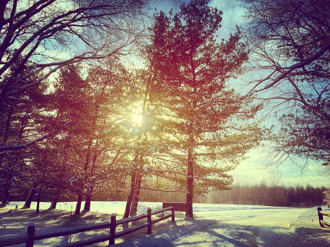 Morning sun. #michiana #inelkhartco #winter #sun #pines #voiceministries