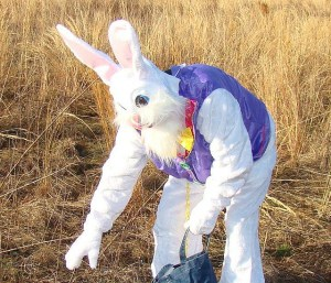 person dressed up as an Easter Bunny putting eggs near a hayfield
