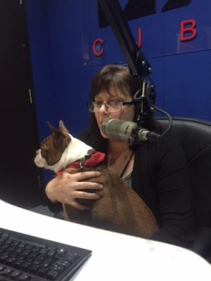 On air and talking into the microphone with brown and white Boston Terrier Pickles on my lap