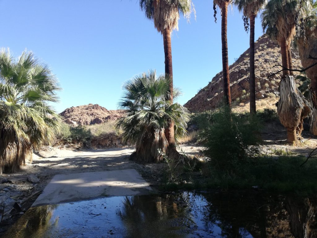 A small pond with palms dotted around it and mountains in the background.
