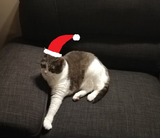 Miss Sugar on the grey couch with a Santa hat added afterward with the paint program.