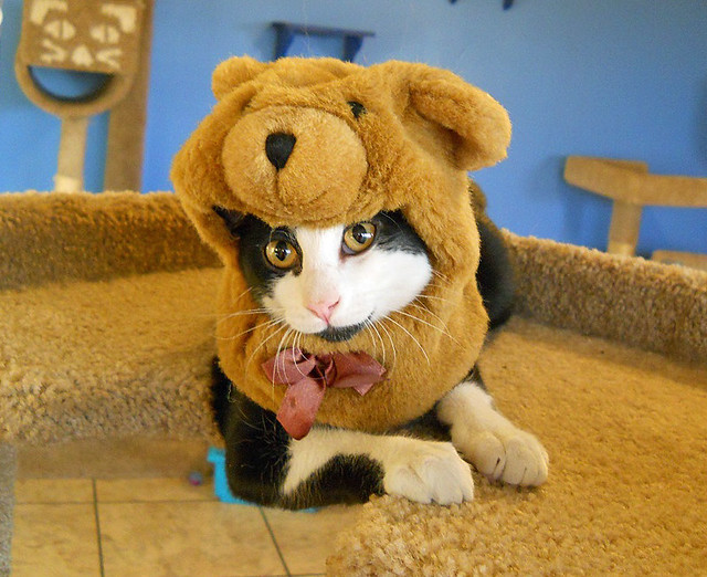 Cat wearing a fuzzy, light brown teddy bear hat. Most of the bear's head is above the cat's face. The cat peeks out below the bear's mouth.