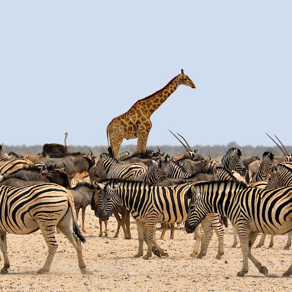 Botswana - South Africa | Volant Travel