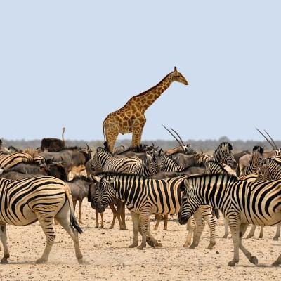 African Animals, Botswana, Africa
