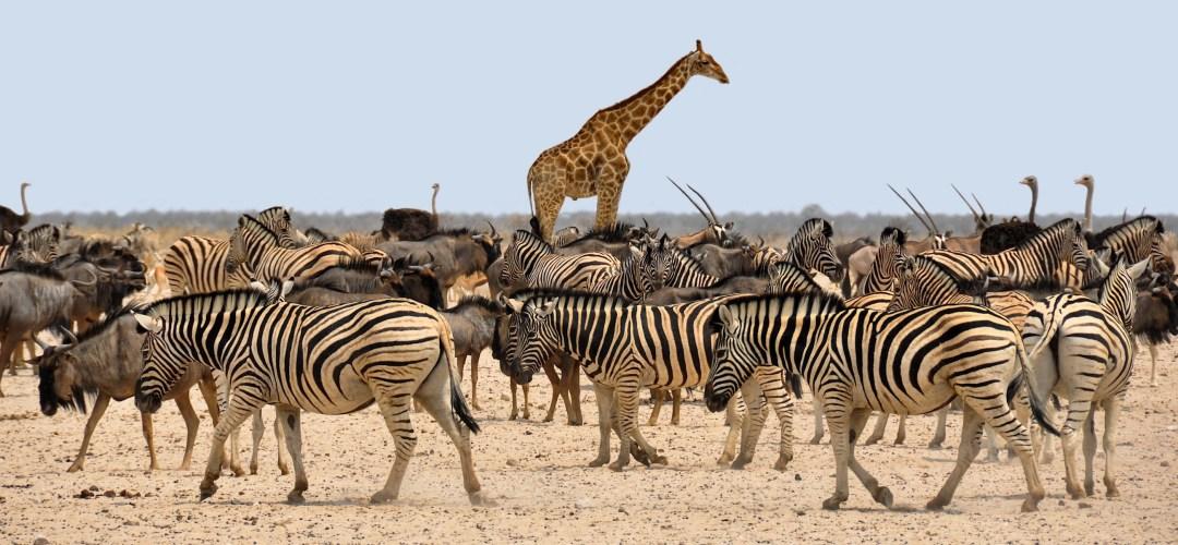 African Animals, Safari, Botswana, Africa