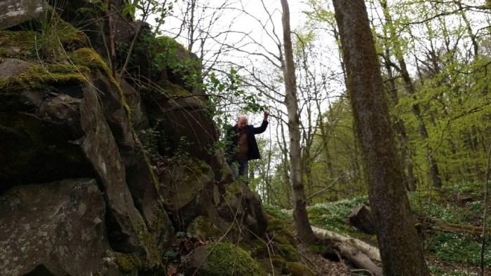 Dr Carl Rehnberg, PhD, founder of Volcanocafé examines the 110 MY old pile of columnar basalt at Rallate near Skäralid national Park, Scania, Sweden. (Photo: Shérine France)