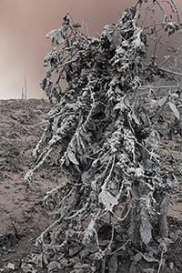 Sinabung ash fall