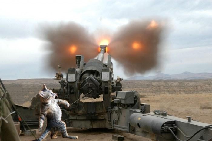 howitzer cat