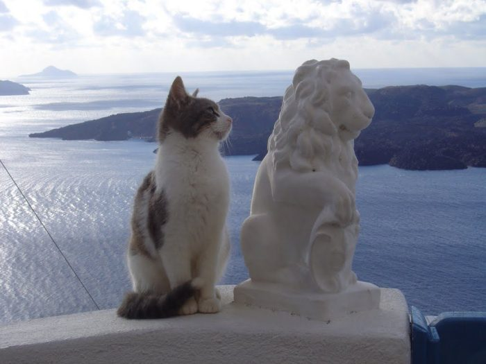 Two cats (one live, one dead) and a volcano.  Photo by Giorgos Katsavos