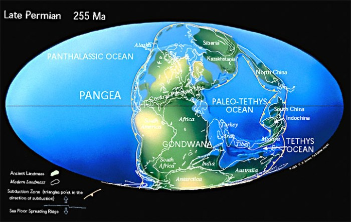 Pangea during the Permian. http://www.scotese.com