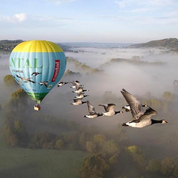 Vol en montgolfère avec les oiseaux
