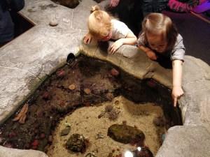 sealife-zeester-bad