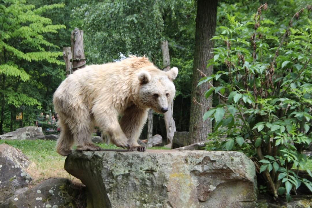 dagje-uit-allwetterzoo-dierentuin