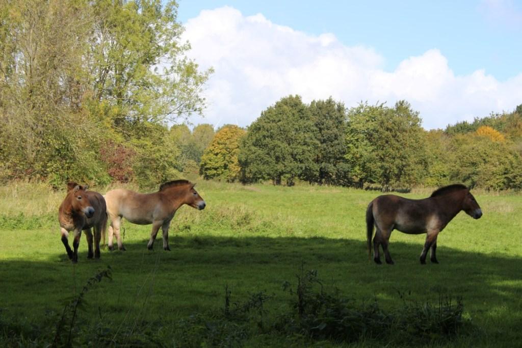paarden-natuurpark-lelystad