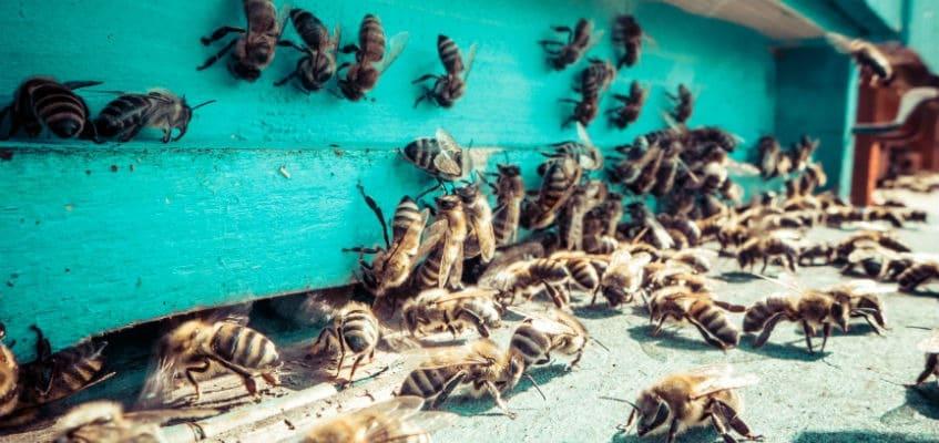 Das Leben aus der Sicht einer Arbeiter-Biene 4