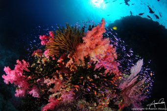 Diving with Ra Divers and Volivoli Beach Resort