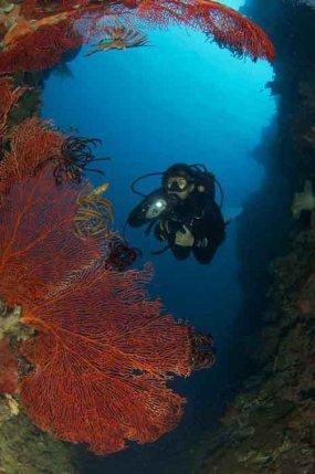 Diving at Volivoli Beach