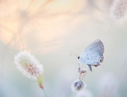 De spirituele betekenis van een witte vlinder